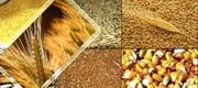 Куплю оптом зерно на территории ЦФО